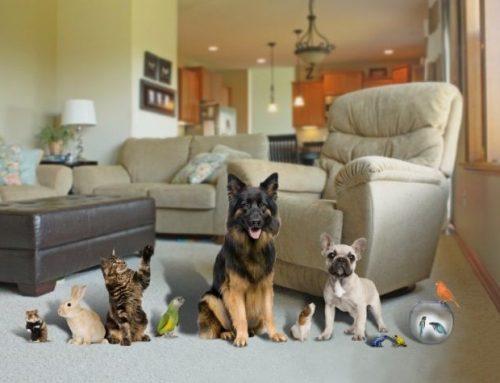 ¿Como adaptar tu casa para una mascota?